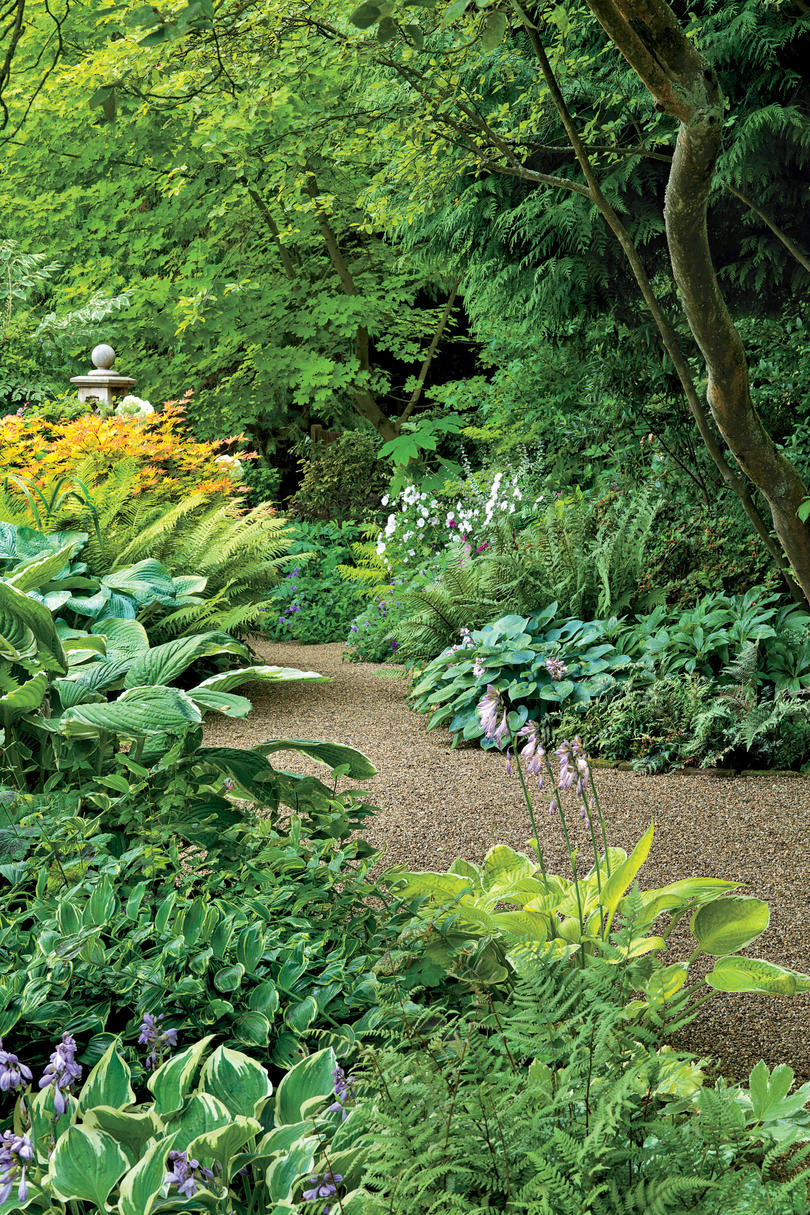 Hostas in Garden with gravel path