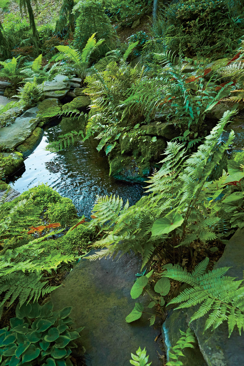 Koi Pond and Fern Garden of Jay Sifford in Charlotte, NC