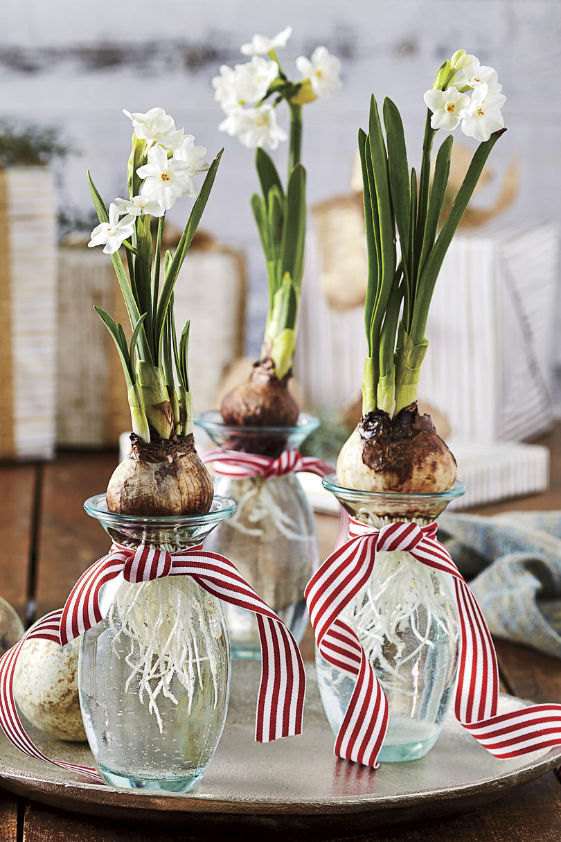 Paperwhite Forced Bulb Vases