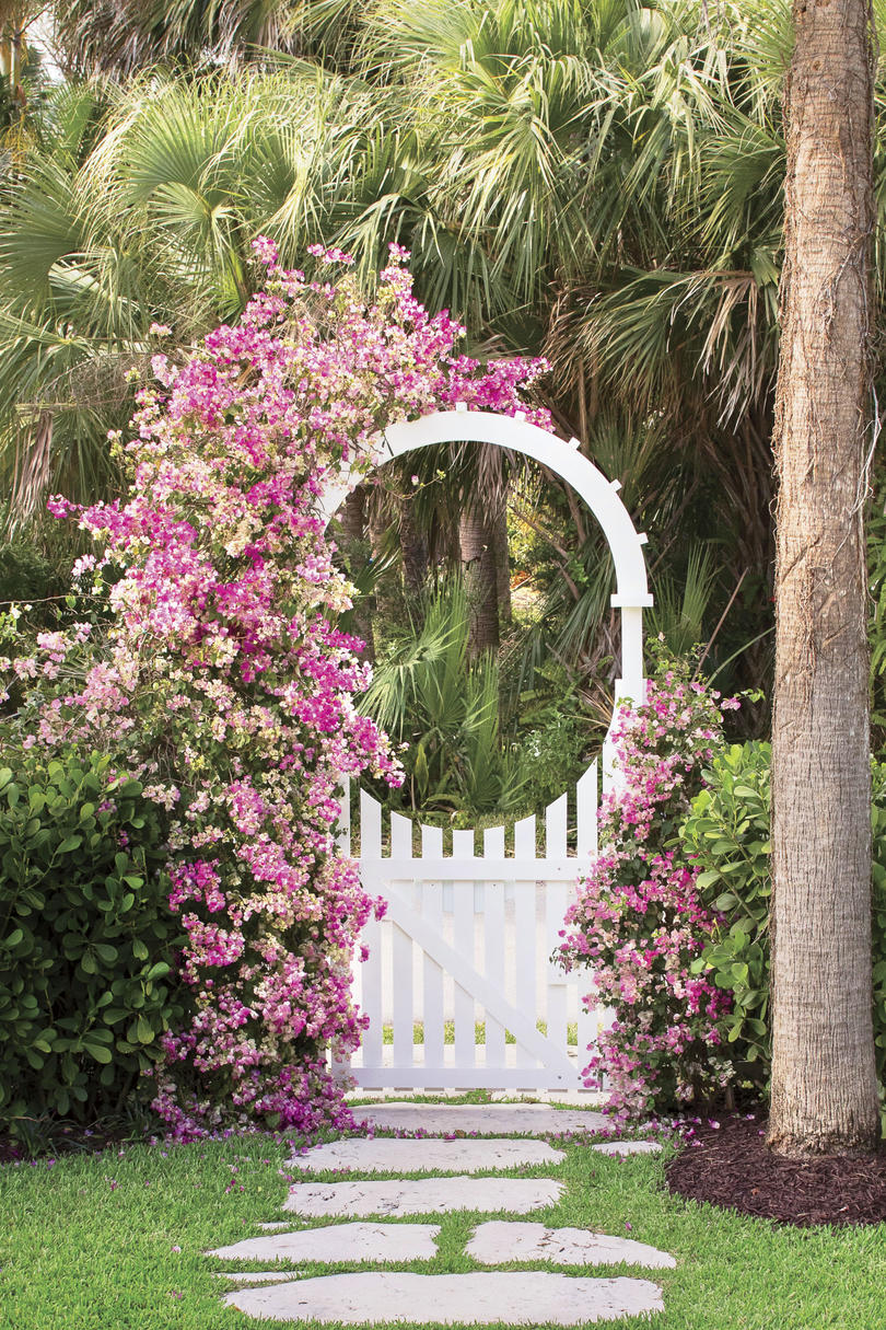 Bougainvillea Blooming Along White Fence
