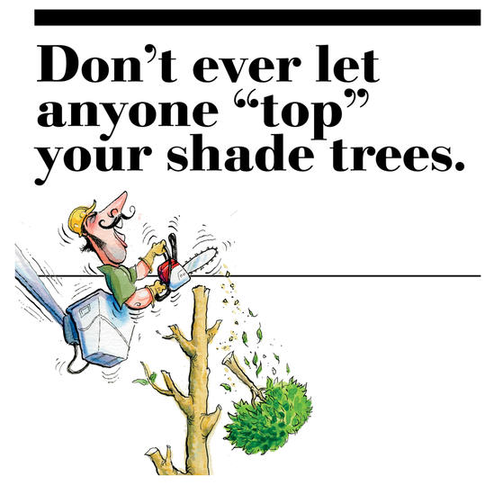 "1. Don't ever let anyone ""top"" your shade trees."