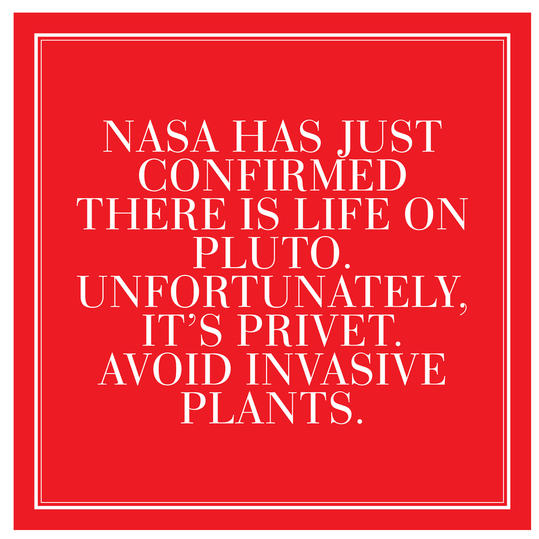 4. NASA has just confirmed there is life on Pluto. Unfortunately, it's privet. Avoid Invasive Plants.