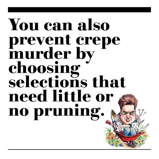 7. You can also prevent crepe murder by choosing selections that need little or no pruning.