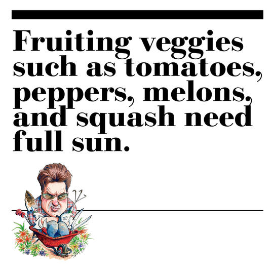 23. Fruiting veggies such as tomatoes, peppers, melons, and squash need full sun.