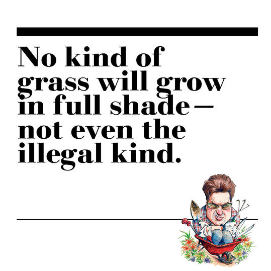 25. No kind of grass will grow in full shade—not even the illegal kind.