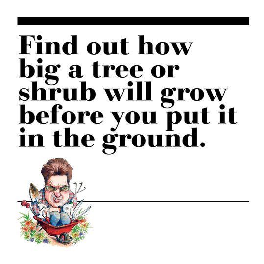 26. Find out how big a tree or shrub will grow before you put it in the ground.