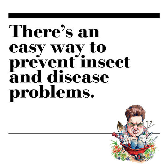 27. There's an easy way to prevent insect and disease problems.