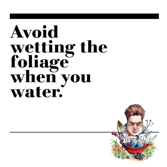 30. Avoid wetting the foliage when you water.