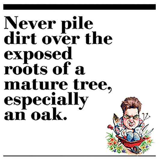32. Never pile dirt over the exposed roots of a mature tree, especially an oak.
