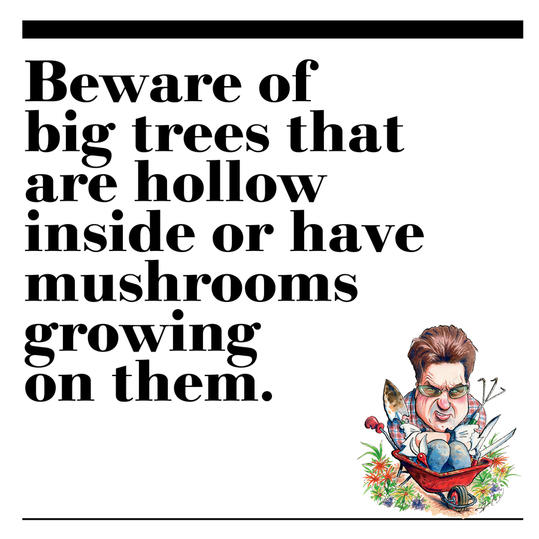 33. Beware of big trees that are hollow inside or have mushrooms growing on them.