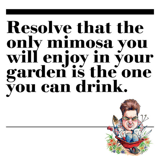 35. Resolve that the only mimosa you will enjoy in your garden is the one you can drink.
