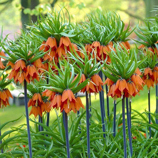 Eww! 10 Smelly Plants That Are Making Your Garden Stink