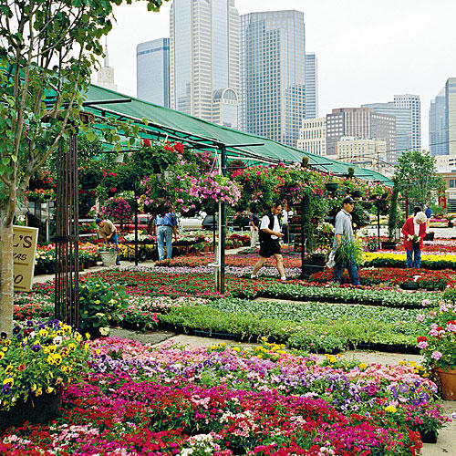 Dallas Farmers Market, Dallas, Texas