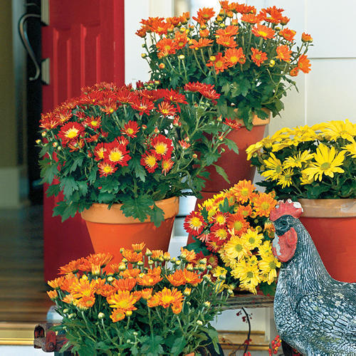 Mother S Day Container Garden Ideas: Fall Container Gardening Ideas