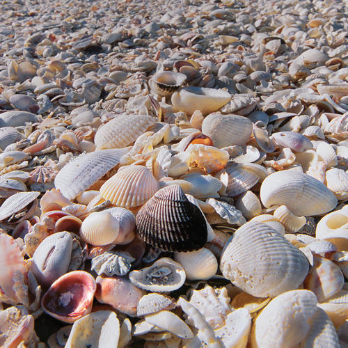 DIY: How to Use Seashell Souvenirs to Decorate Your Home ...