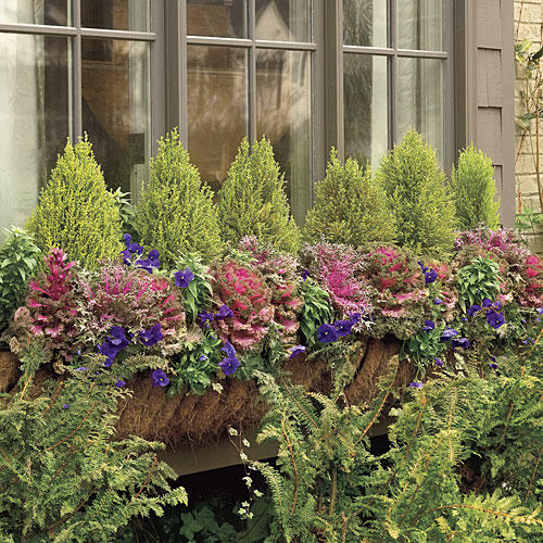 1203 Window Boxes: Color with Kale