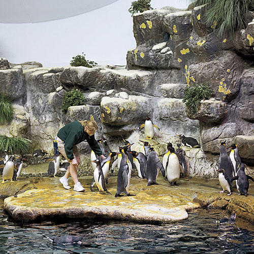 photo of penguins at aquarium at Moody Gardens
