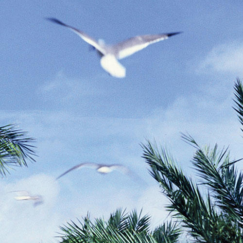 a photo of seagulls in the sky in galveston, texas