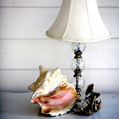 0906 Conch Shell with Lamp