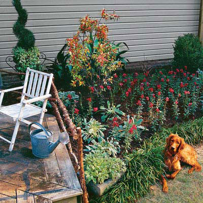 garden border with red flowers, monkey grass, and boxwood bushes in the back with an Irish setter dog sitting in the front