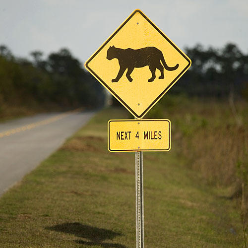 Florida Everglades: Panthers Street Sign
