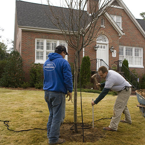 Home Gardening Tips: Buying the Biggest-Size Shade Tree You Can Find