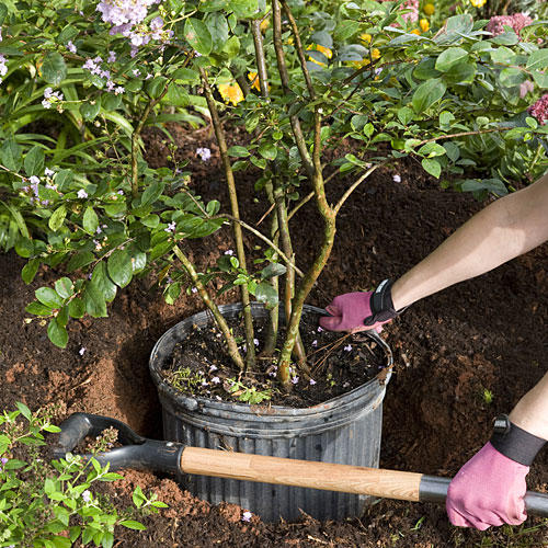 home gardening tips planting trees and shrubs in teeny holes. beautiful ideas. Home Design Ideas