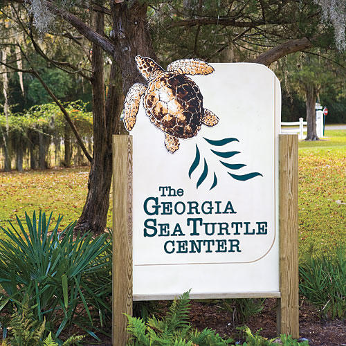 Jekyll Island: Georgia Sea Turtle Center