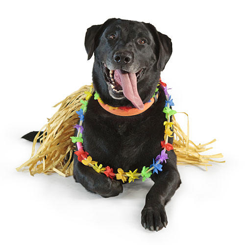 Hula Dancer Dog Costume