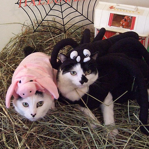 Wilbur and Charlotte from Charlotte's Web