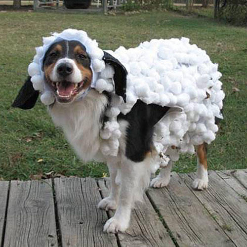Dog in Sheep's Clothing