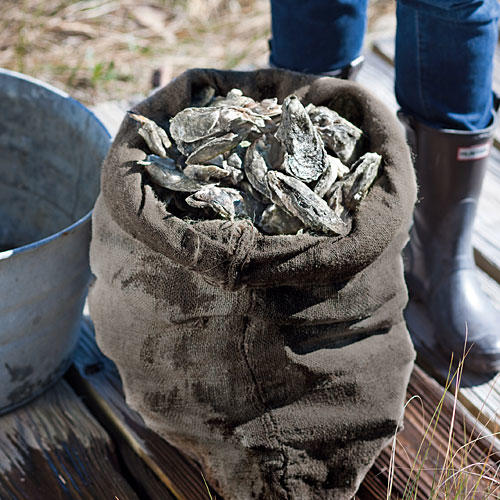 Planning Your Oyster Roast