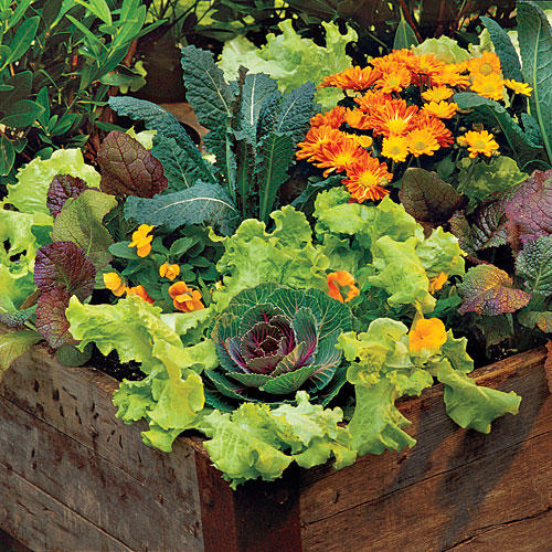 Lettuce  Violas   Mums. Spectacular Container Gardening Ideas   Southern Living