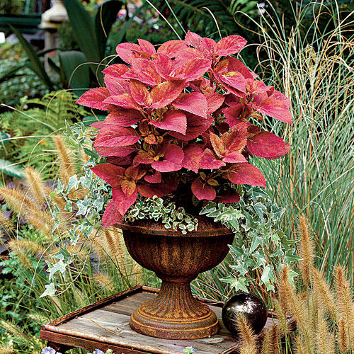 Coleus   Ivy. Spectacular Container Gardening Ideas   Southern Living