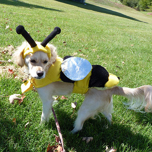 Bumblebee Dog Costume