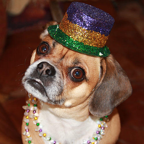 Ready for Mardi Gras