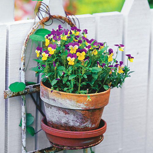 1309 Heirloom Viola Container