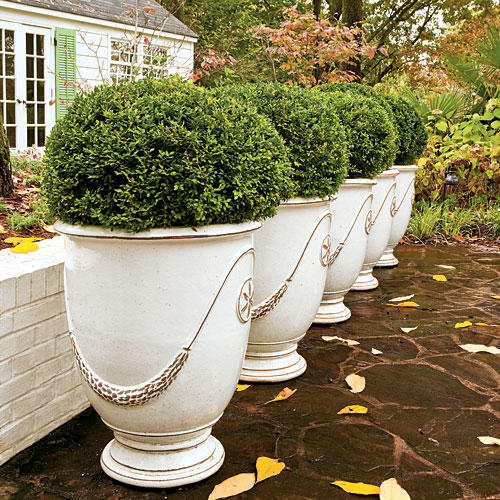 Easy Inviting Boxwoods