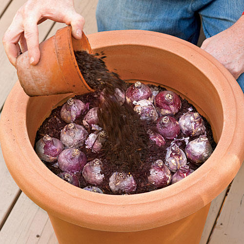 1303 How to Plant Bulbs in a Container: Step Four