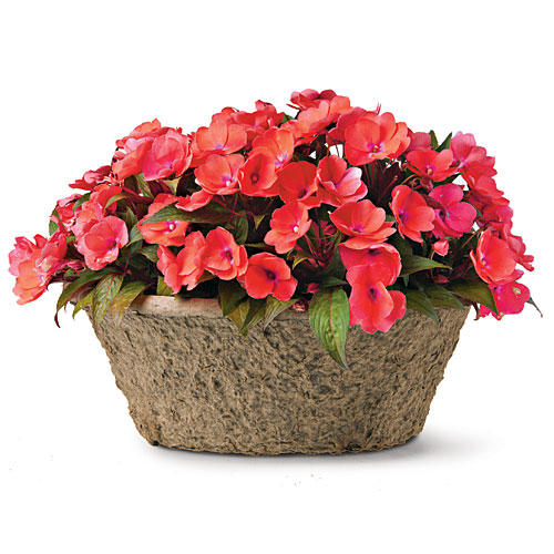 Best plants for containers southern living celebration tropical peach new guinea impatiens mightylinksfo