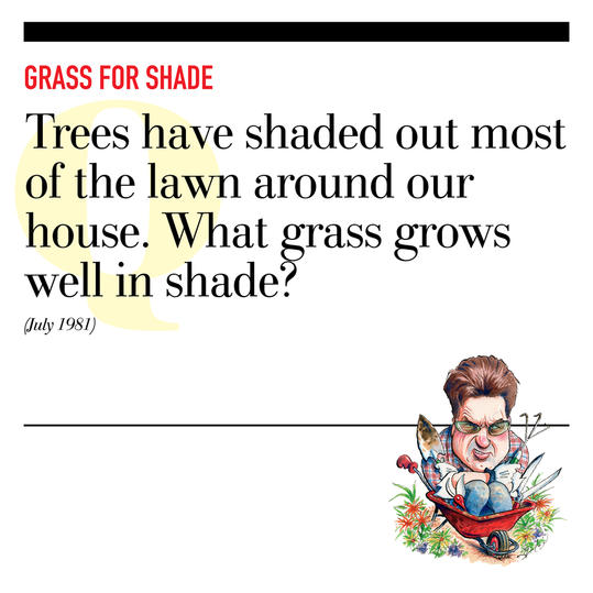 Grass for Shade
