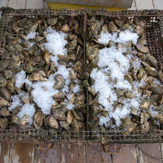 Get in on the Virginia Oyster Revival