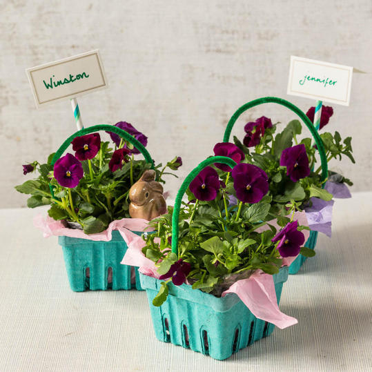Plants in DIY Easter Basket