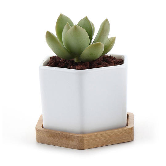 Succulent Plant Pot With Bamboo Tray, Set of 2