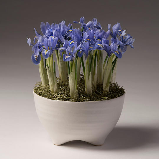 Iris Bulbs and Footed Ceramic Pot