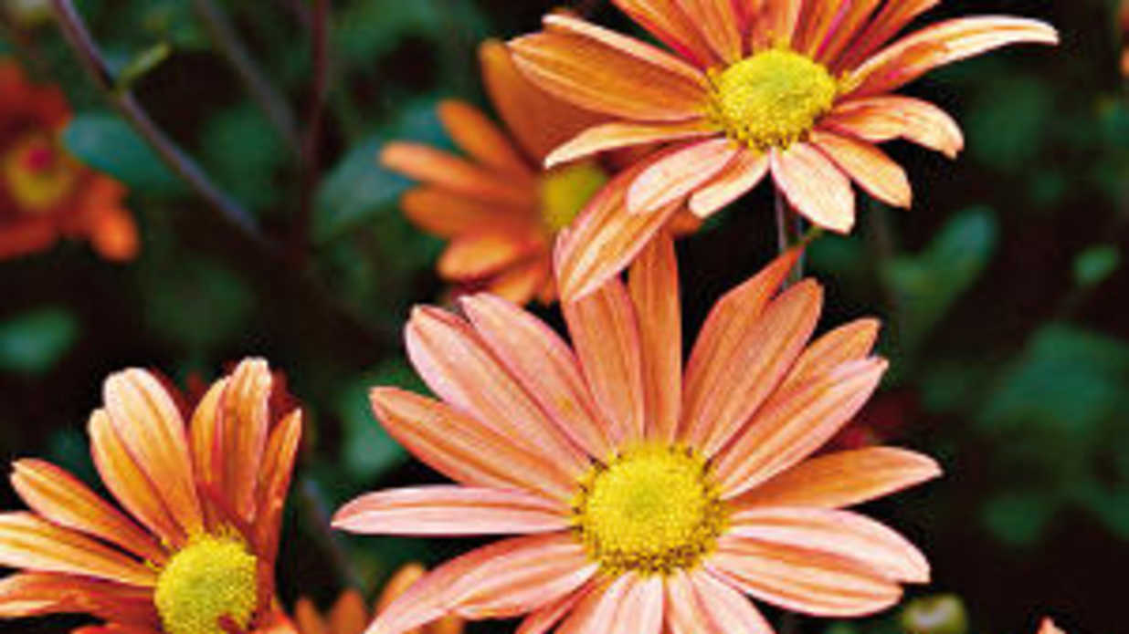 The Season's Best Perennials