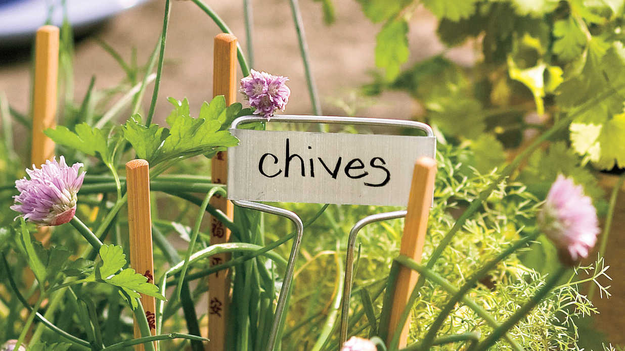 Plant These Herbs in Winter: Chives