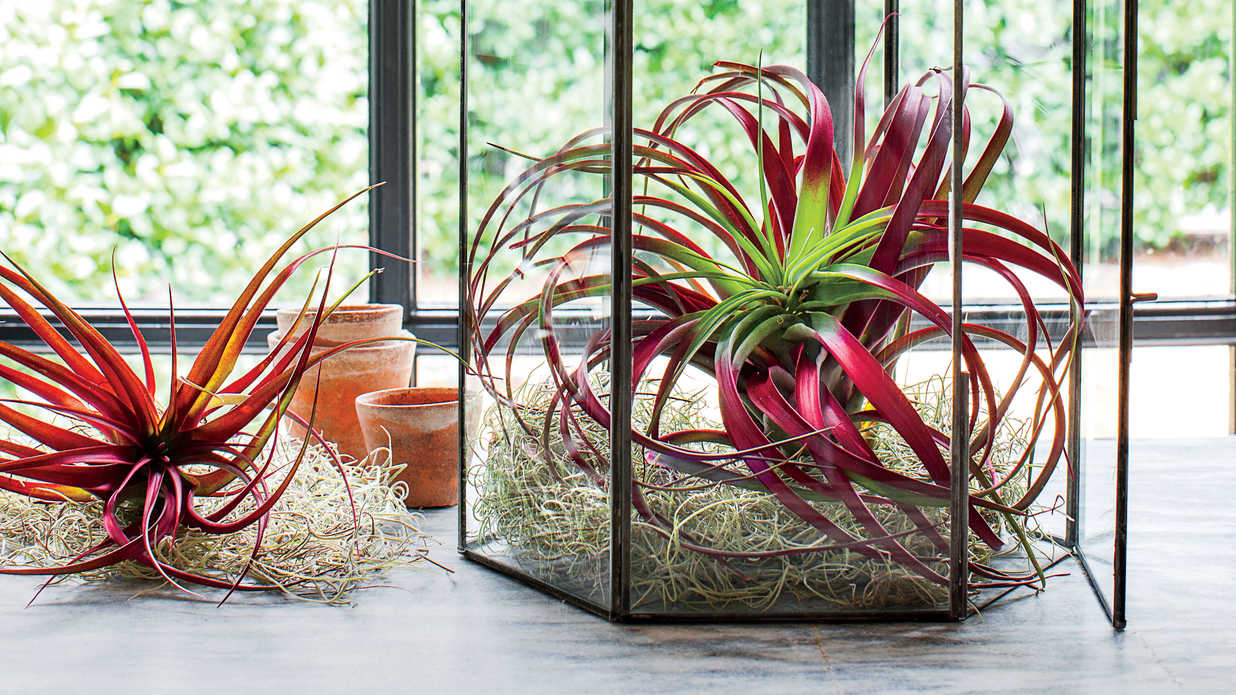 Take It Easy with Air Plants