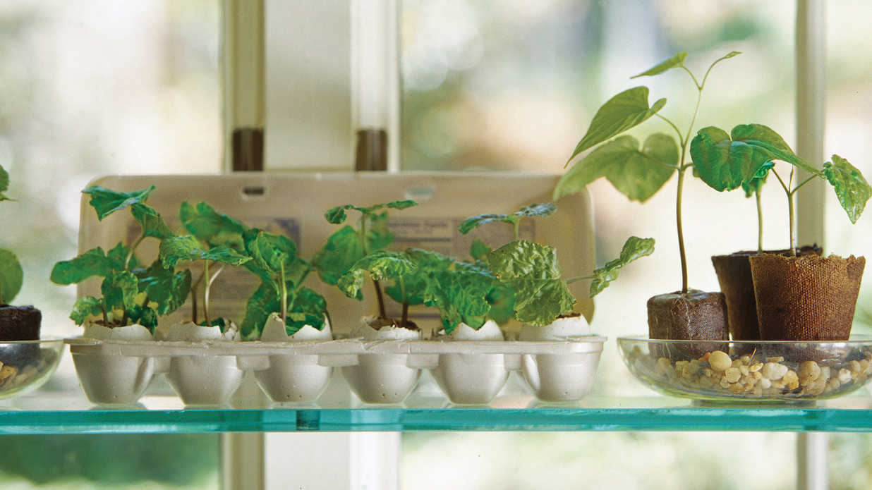 Start Seeds in Your Windowsill