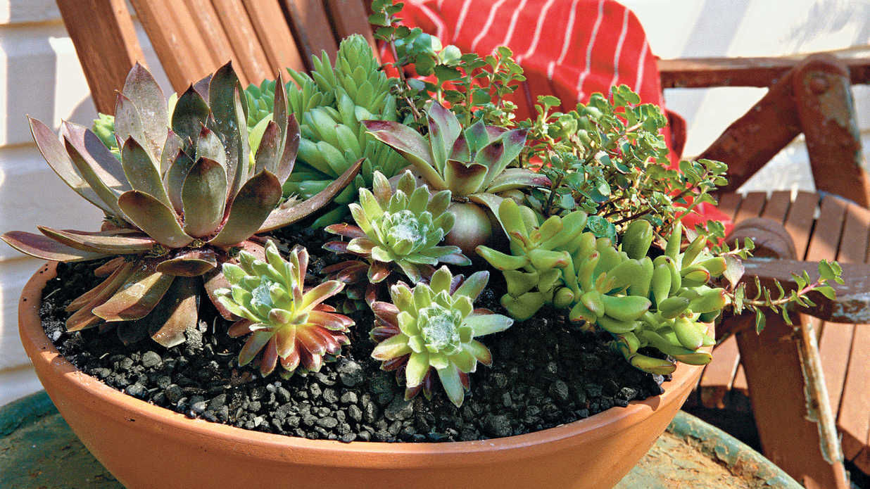 Heat-Savvy Plants